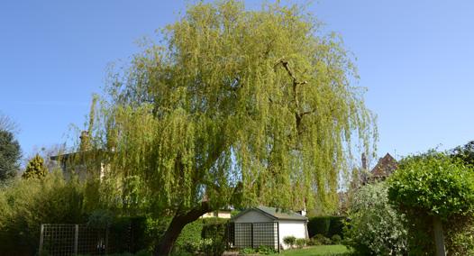 Jardins liorzou cr ation et entretien d espaces verts for Entretien jardin 31